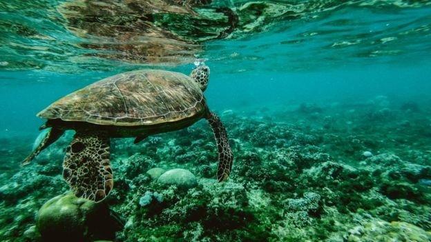 وابستگی زندگی سه میلیارد انسان به حیات وحش دریایی