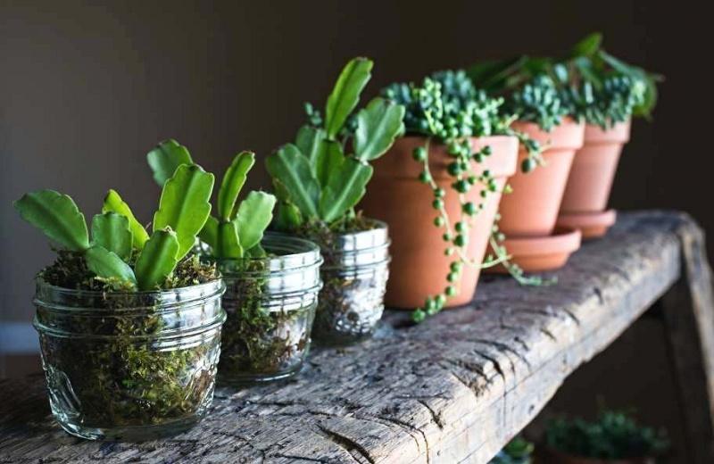 گلها و سبزیجاتی که تنها با یک لیوان آب می توانید پرورش دهید