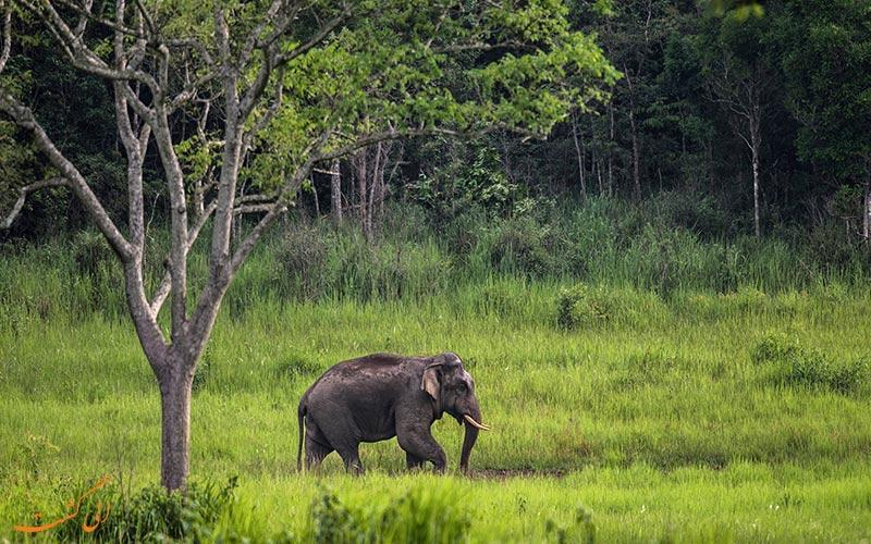کائو یای، پارک ملی تماشایی در تایلند