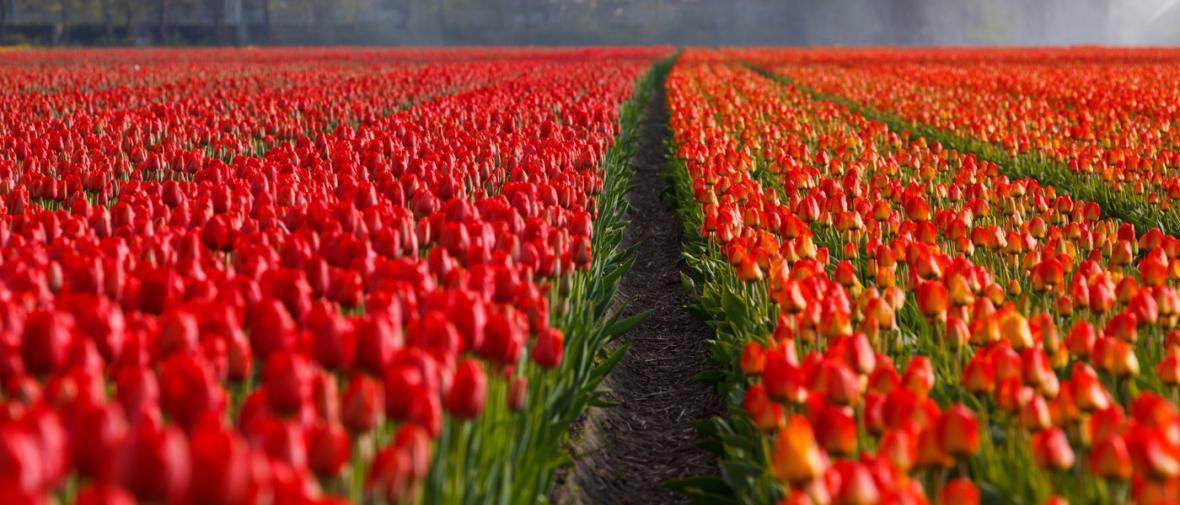 سفر به هلند؛ سرزمین گل لاله