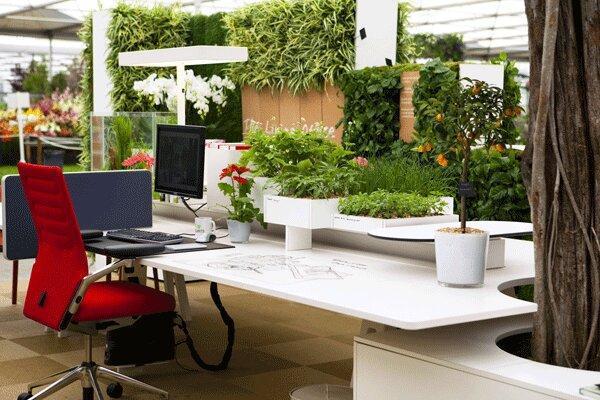 وجود گیاه آپارتمانی در محل کار موجب کاهش استرس می گردد