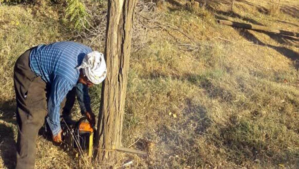 خبرنگاران درختان خشک و بیمار محدوده گردشگری تالاب زریبار قطع می گردد