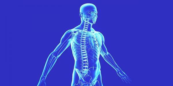 تحقیق در خصوص اعضای بدن انسان؛ 74 حقیقت جالب راجع به بدن انسان