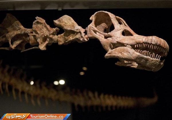 کشف بقایای قدیمی ترین دایناسور موجود در کره زمین