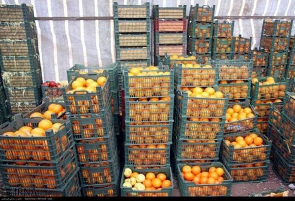 خبرنگاران 700 تن میوه شب عید در کردستان توزیع شد