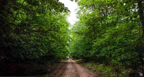 جنگل های هیرکانی گلستان، فسیل زنده منحصربه فرد دنیا
