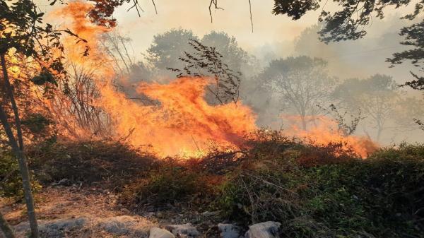 کوشش برای مهار آتش در منطقه درازنو کردکوی ، تبانی باد و آتش برای خاکستر کردن جنگل های هیرکانی